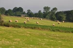 La campagne en Normandie...