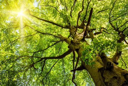 Communion et collaboration avec l'arbre