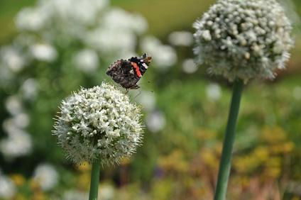 Stage - Guérir la terre en jardinant : Automne - Laurence Imhoff