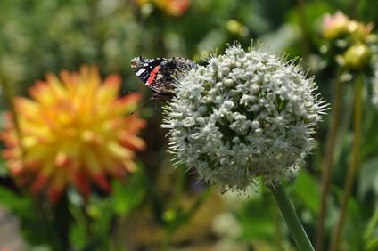 Conférence Guérir la terre en jardinant : pourquoi et comment - Laurence Imhoff - 16 octobre 2015 à l'arbre aux étoiles