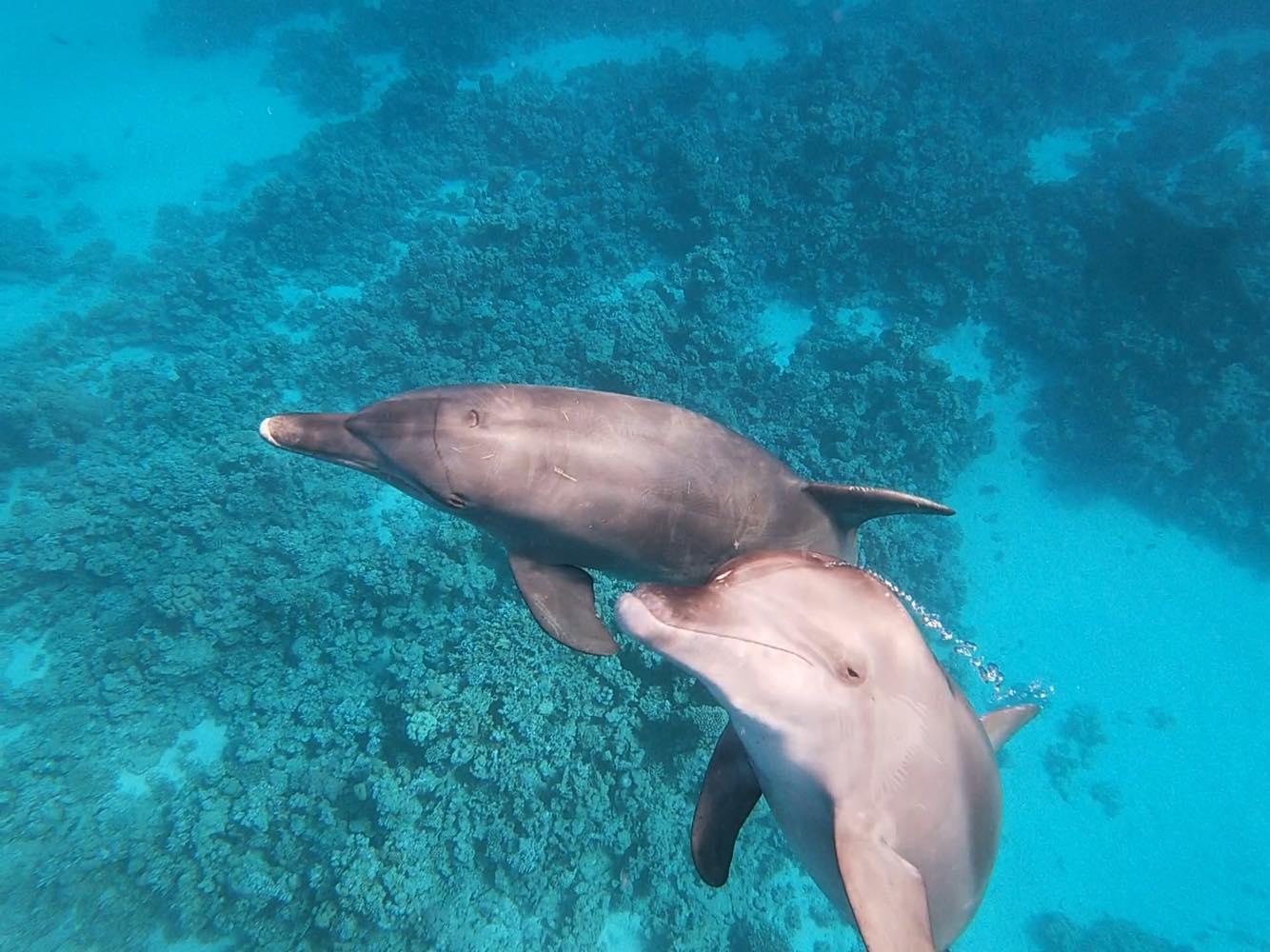 Un cercle autour des dauphins