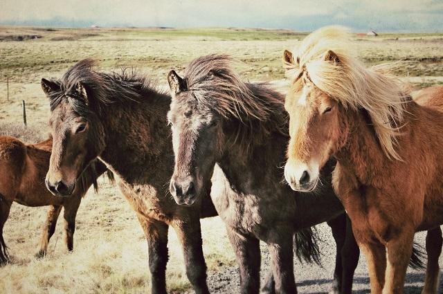 La sagesse des chevaux - dons reversés pour une association